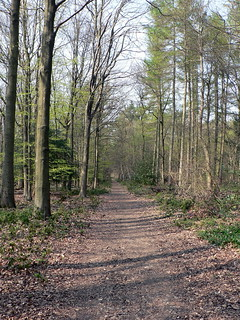 Through the woods, on Box Hill   by lostajy
