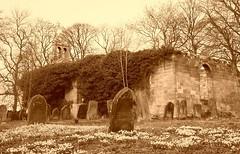 Ruins of St Helen's Church, Longhorsley