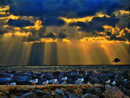 sea sky italy panorama sun animal sunrise italia nuvole mare blu cielo napoli naples gabbiani scogli naturesfinest anawesomeshot