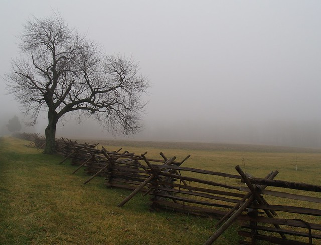 Tree in the fog at Gettysburg -- cropped