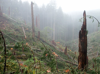 Coastal rainforest just cut down. | by F.Eatherington