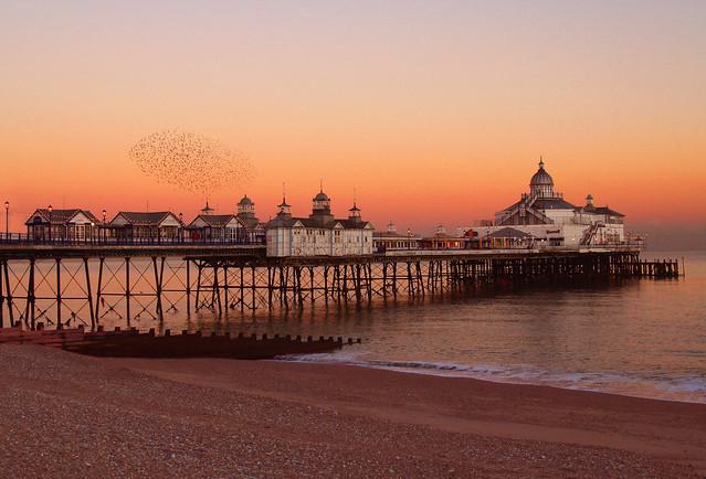Eastbourne pier & starlings