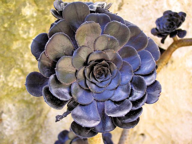 Black exotic garden