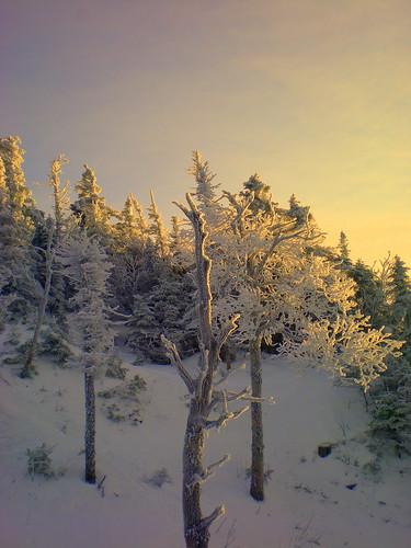 winter sun snow tree ice vermont december lift delete7 explore saturation icy savedbythedeltemeuncensoredgroup 2007 smugglersnotch smuggs dmu cotcmostinteresting interestingness59 i500 jefforsonville