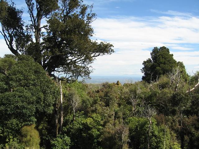 Ahuriri Scenic Reserve