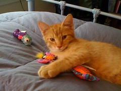 Check out the adorable toys @czejohnson brought for Watson. She's the best! | by GirlieErin