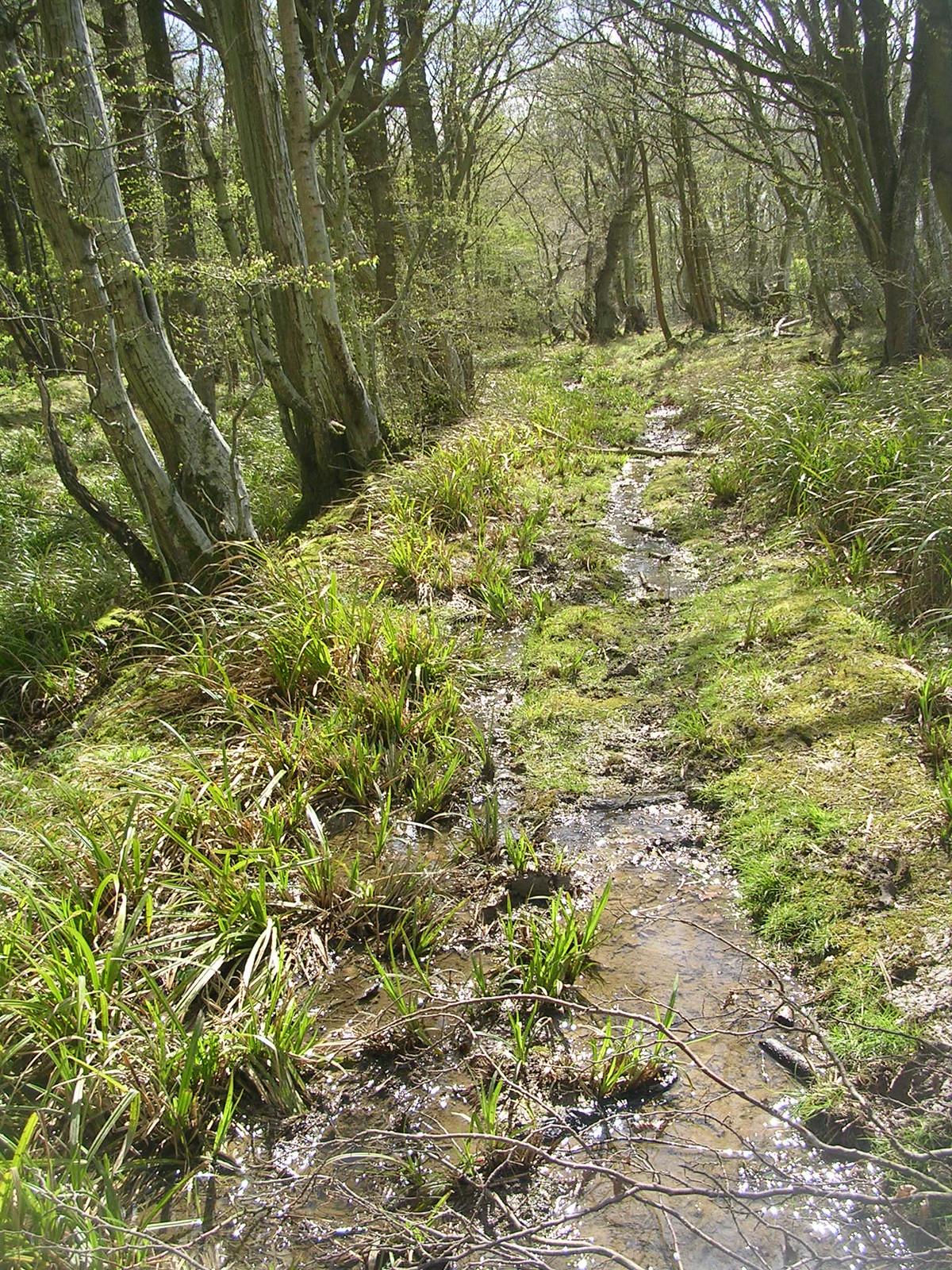 Boggy path Robertsbridge to Battle