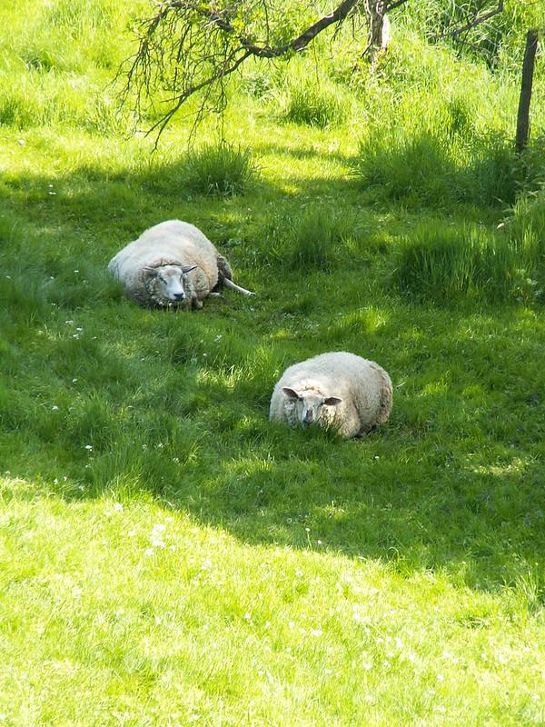 Ich glaube das Schaf im Veilchental das müssten sie fragen. Aber ich fühlte mein Herz wie wild schlagen, weil ich aus seiner Heimat floh wurde seine Entlassung als verzweifelt notwendig bezeichnet 525