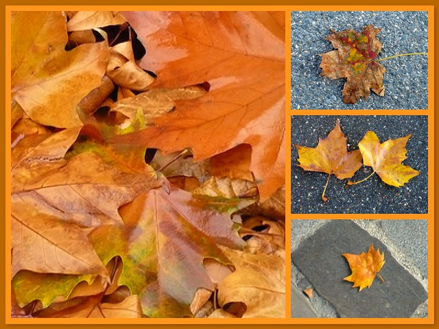 23 novembre 2007 Feuilles d'automne / Leaves in fall