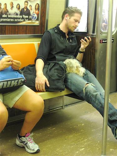 Sleepy Dog in New York Subway