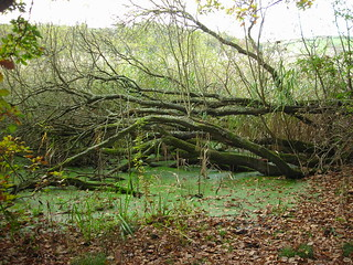 Slapton Ley Nature Reserve, South Hams, Devon. | by Jim Linwood