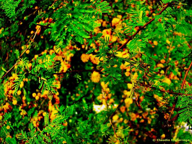 Verde & Amarillo / Green & Yellow