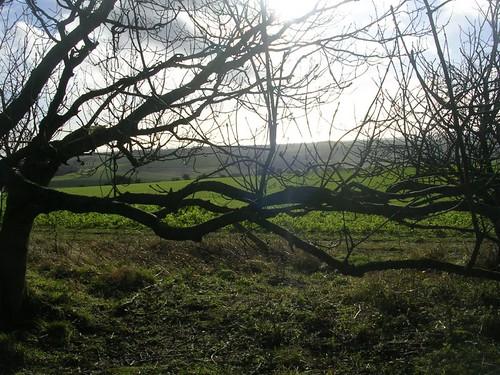 Scene through trees Amberley to Arundel