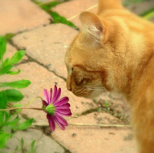 Jaspurr always takes the time to smell the flowers. | by *~Dawn~*