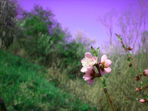 Purple flower. purple sky