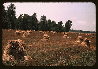 Typical southeastern Georgia farm with newly harvested field of oats  (LOC) | by The Library of Congress