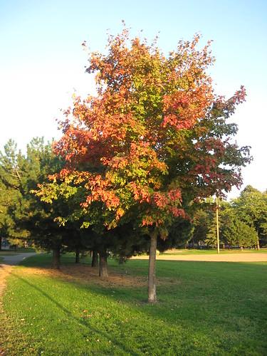 Van Cleeve Park, Fall 2007