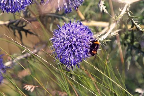 buzzing-on-blue