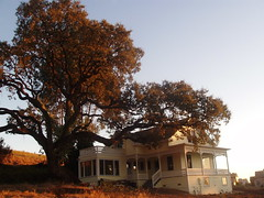 Oak, Victorian