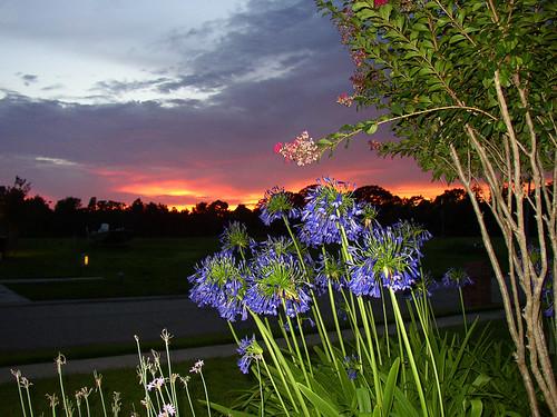 sunset louisiana flash