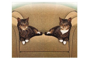 Two cats on sofa | by Miki James