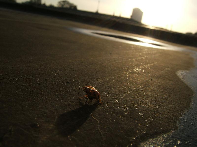 ladybug on the roof