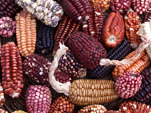A huge variety of corn is grown in Peru. | by jennifrog