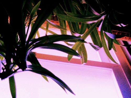 pink blue light red plants plant window nature sunrise bath houseplant availablelight steam tinted steamy botanica spiderplant aroundthehouse lightisalive waterisalive everythingisalive plantshavespirit botanicawildtame
