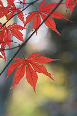 Autumn tint | by suneko