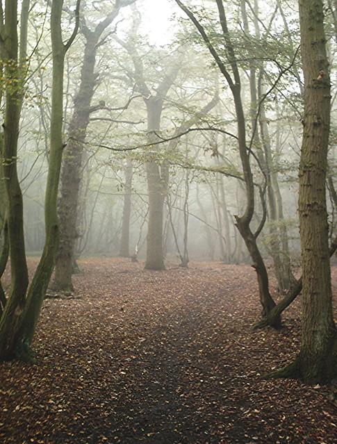 Beckney Woods, Hockley