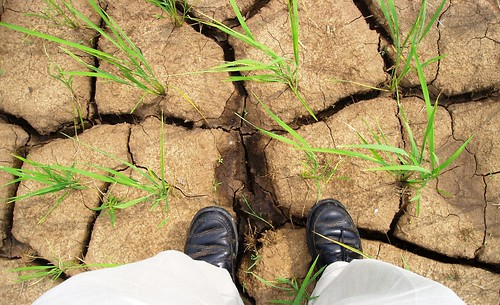 drought | by IRRI Images
