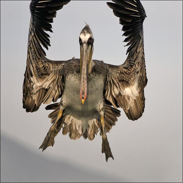 cleared for landing........