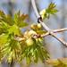 week of spring :: monday.5