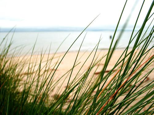 green beach grass potomacriver