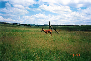 South Africa 416 041293 Krugersdorp Game Reserve