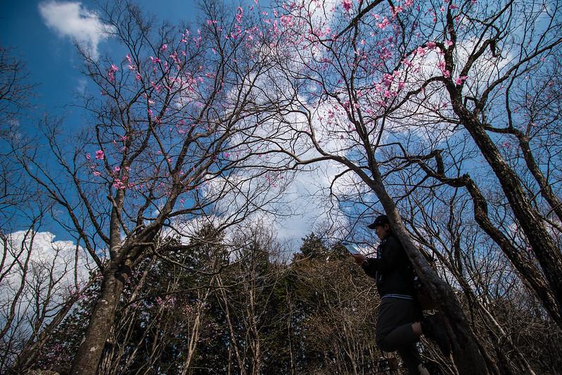 20150425-鳴虫山-0281.jpg