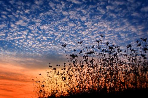 sunset sky reflection clouds wow landscape twilight bravo lace blossoms 100v10f queen rememberance passing annes naturesfinest flickrsbest mywinners karmapotd karmapotw impressedbeauty aplusphoto superhearts ysplix