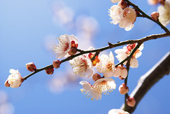 Spring has come   by Woodenship