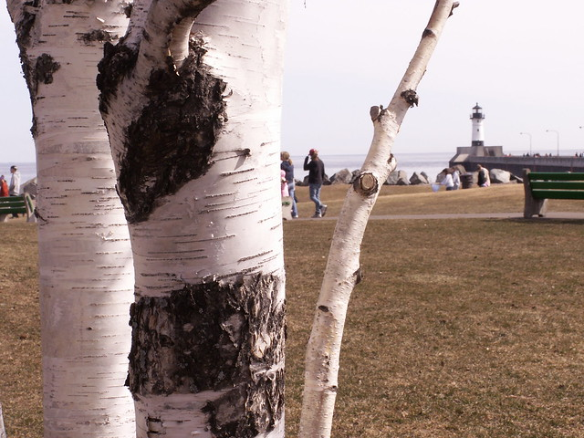 birches & lighthouse