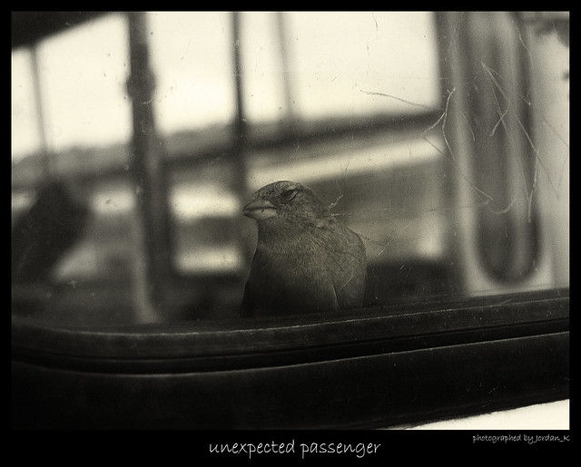 unexpected passenger