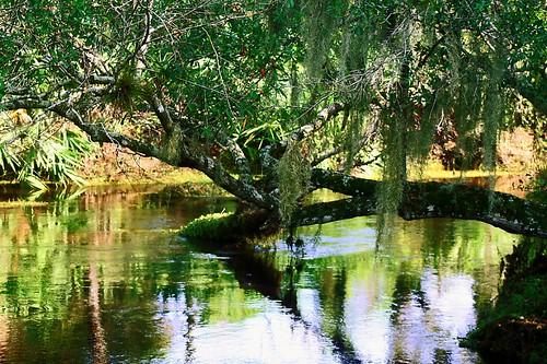 water river landscape geotagged moss florida meander turkeycreek turkeycreeksanctuary pambay geo:lat=28016404 geo:lon=80600215