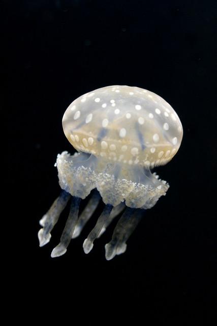 Monterey Bay Aquarium 18