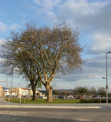 Old tree, new garden