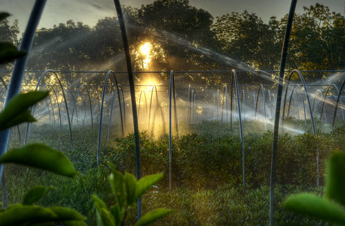 morning mist canada water leaves sunrise droplets leaf movement nikon farm niagara spray hose east master greenhouse sprinkler lincoln splash legacy hdr goldenhour ribbet lensflares photomatix beamsville tonemapping nikkor1855mm agricolo agricoltore d5100 daarklands trolledproud trollieexcellence magiktroll daarklandsexcellence pinnaclephotography poeexcellence paulboudreauphotography nikond5100