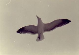 SeaBird.