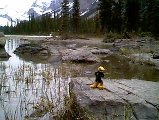 Daffy at Spirit Lake in Alberta