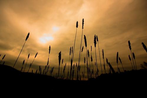 light field silhouette clouds contrast dark vermont grains vt randolph canon40d