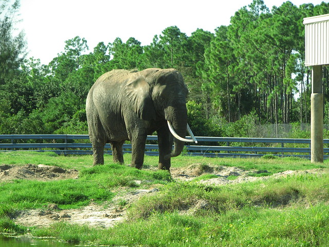 Road Trip to Florida: 5 Spots to Enjoy the Wildlife
