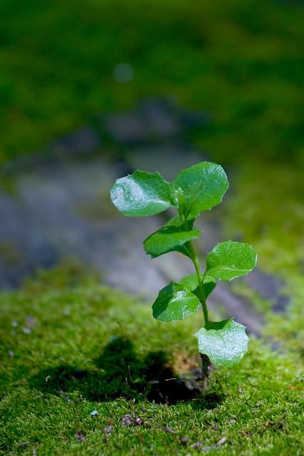 Botany 01