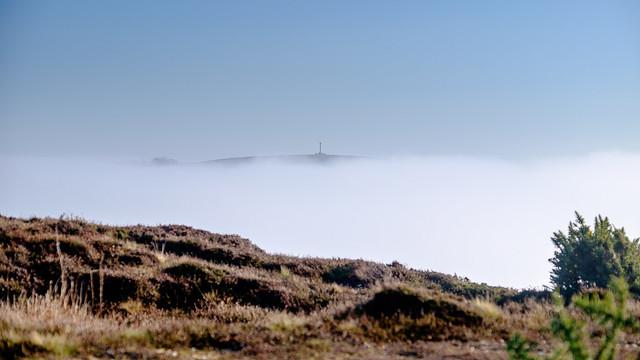 Frost & Fog at Headon Warren - DSCF2188